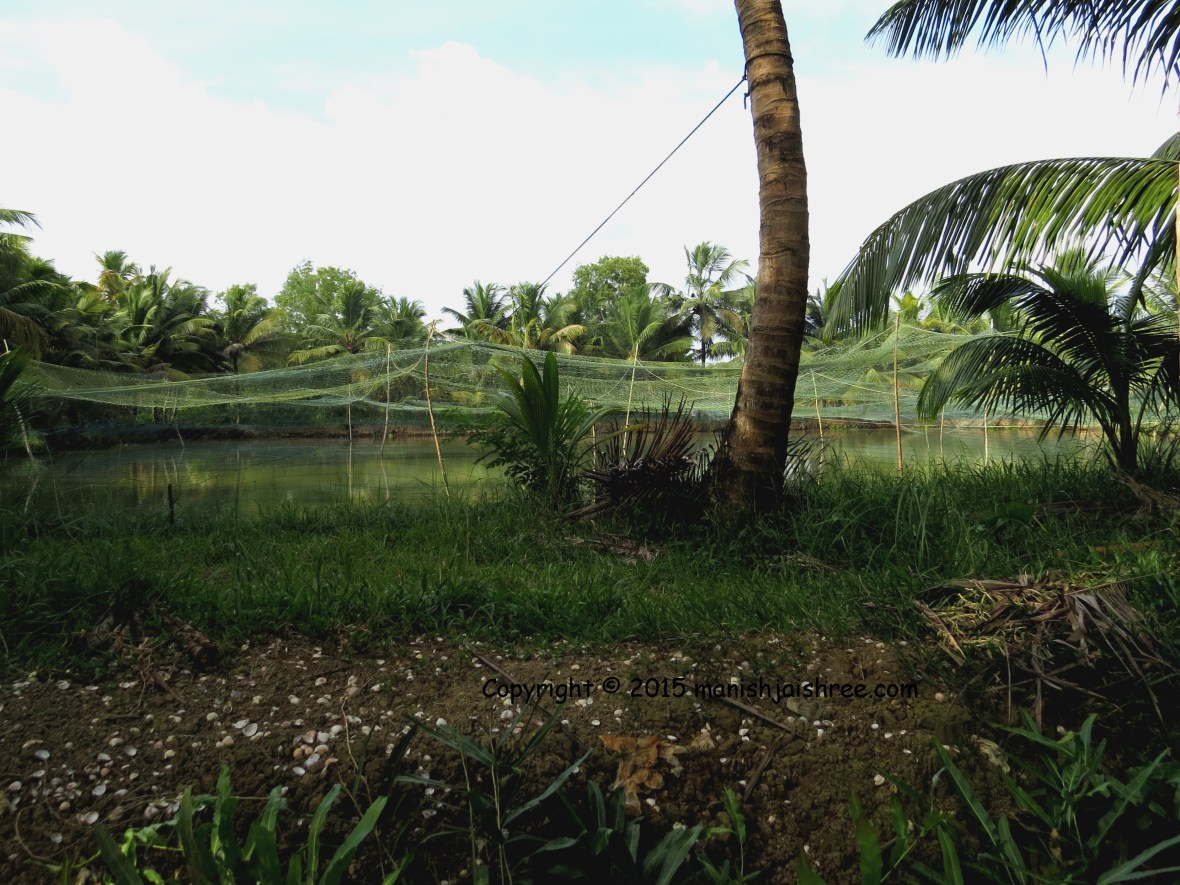 The netted ponds in Munroe Island