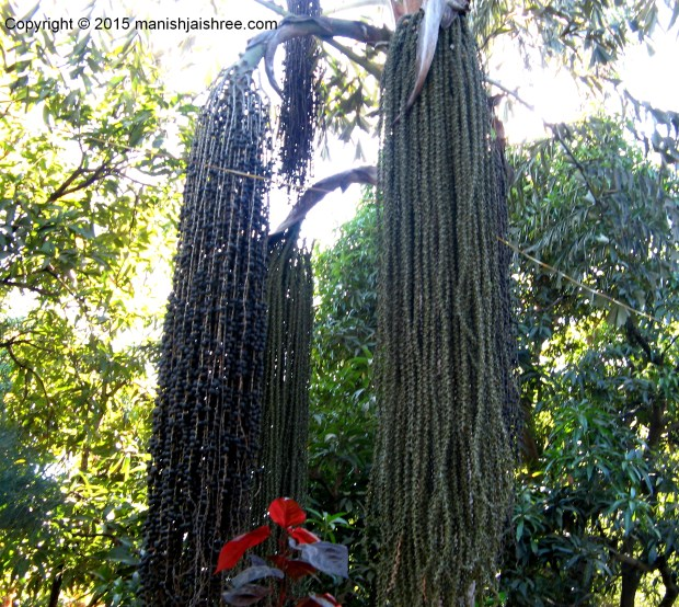 A tree with beaded hairs