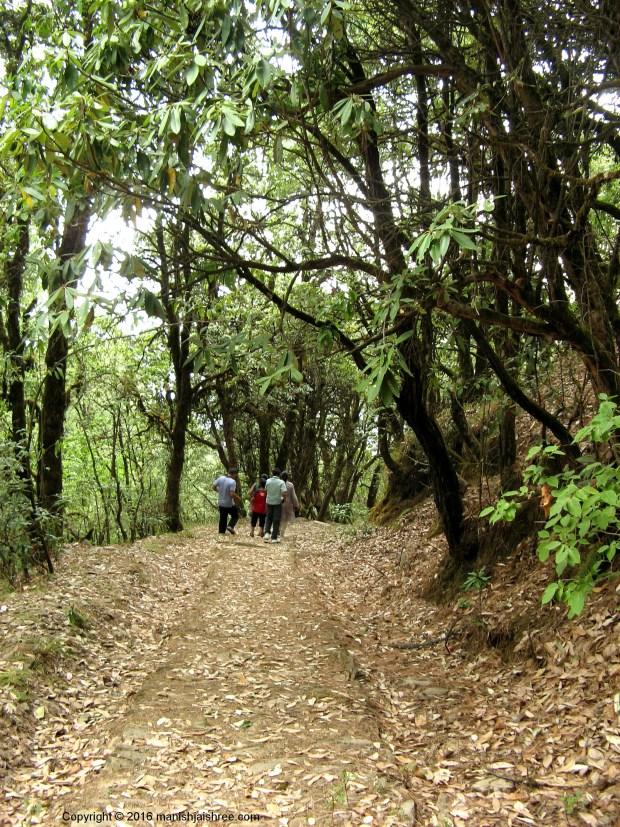 Trekking in Binsar