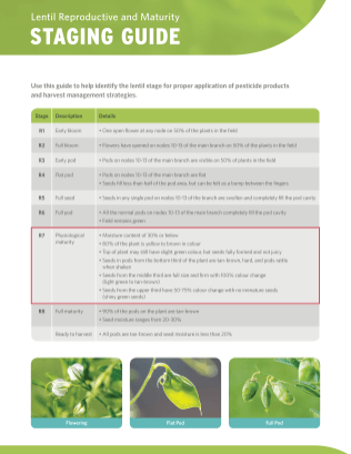 Lentil Reproductive and Maturity Staging Guide_Page_1