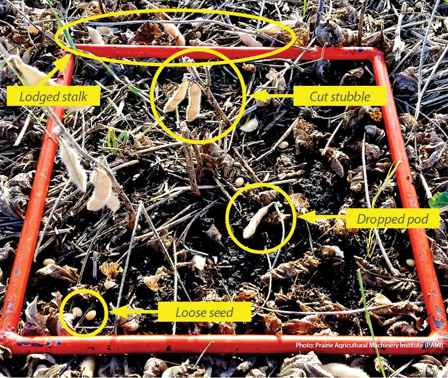 Preventing Soybean Harvest Loss – Manitoba Pulse & Soybean