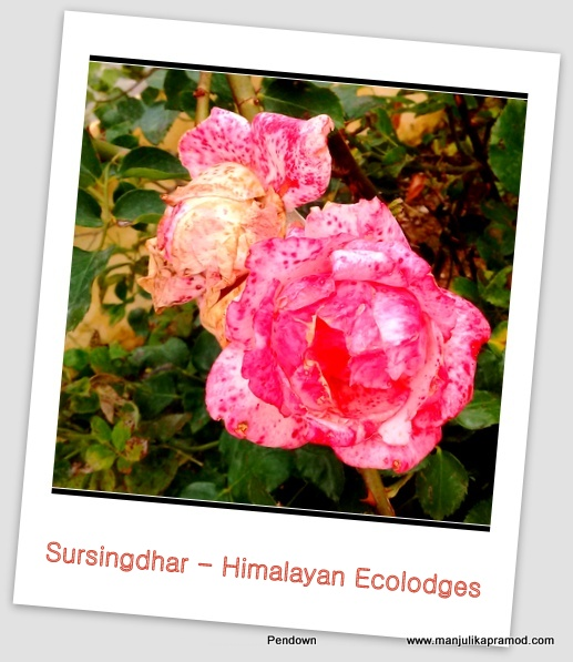 Flower, Monsoons, Flower photography, Sursingdhar