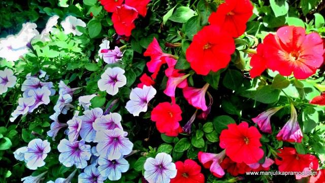 45 million flowers, Dubai Miracle Garden