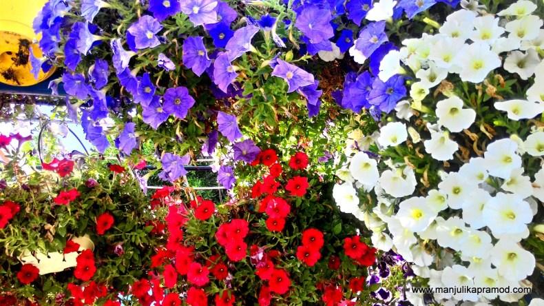 Dubai, Natural Flower Garden