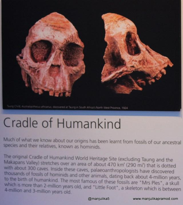 Cradle of Humankind-Mrs Ples
