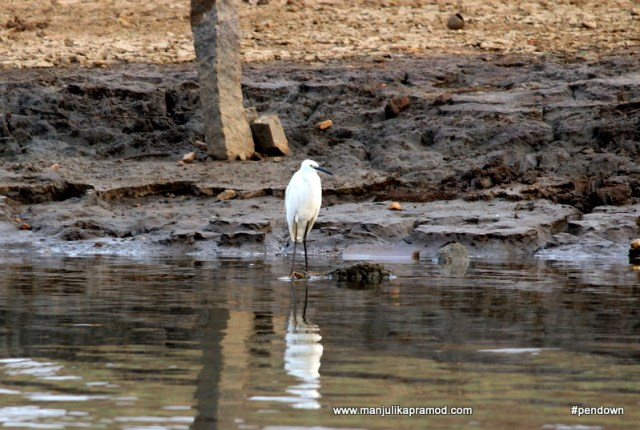 Bird watching at Kabini