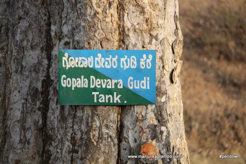 Gopala Devara Gudi Tank, Nagarahole tiger reserve