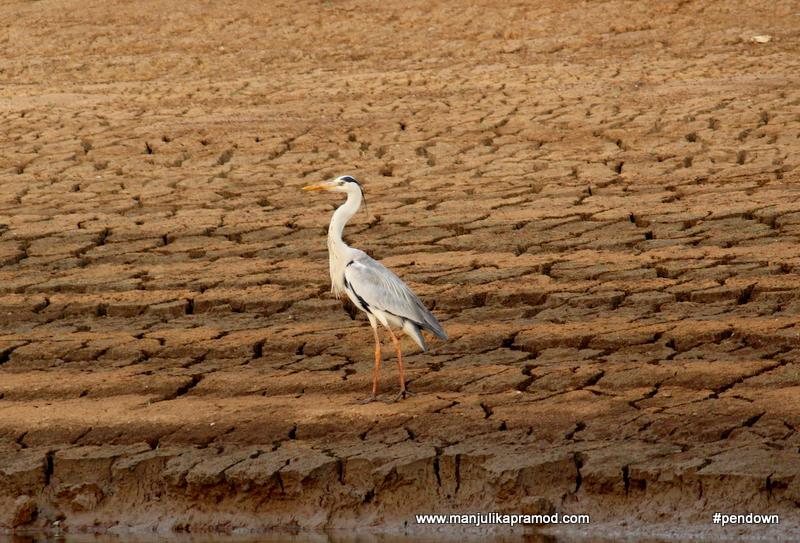 Kabini river makes for bird photographers delight