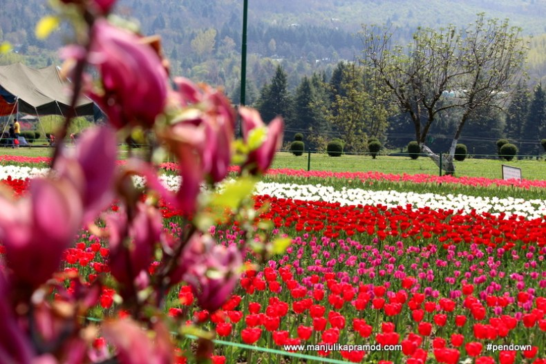The beauty of gardens in Kashmir