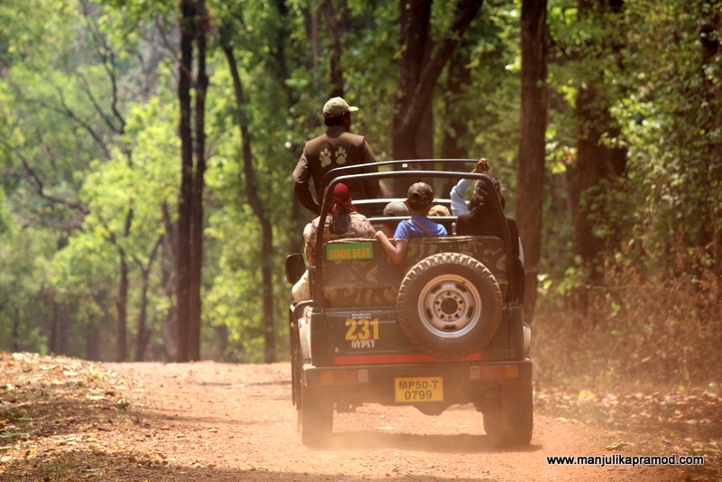 Jungle Safari, India, Wildlife, Travel