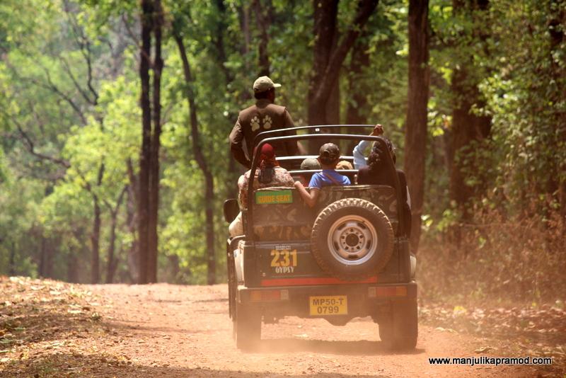 Jungle Safari, India, Wildlife, Travel