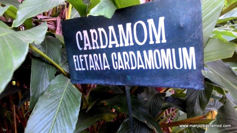 Cardamoms