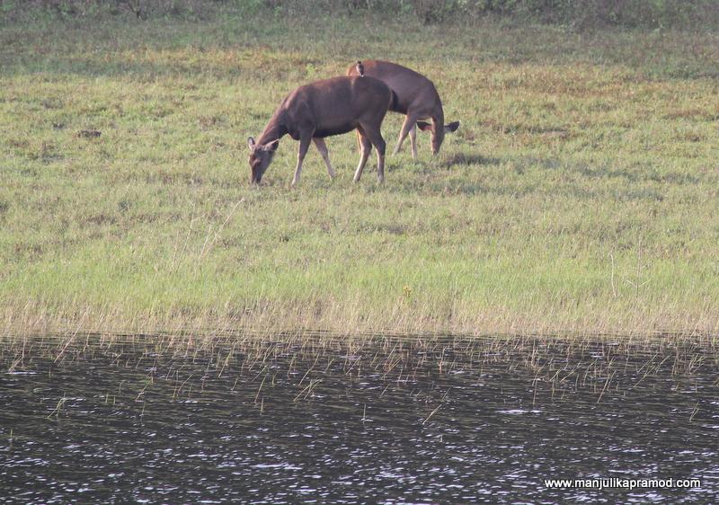 Wildlife fun in Thekkady