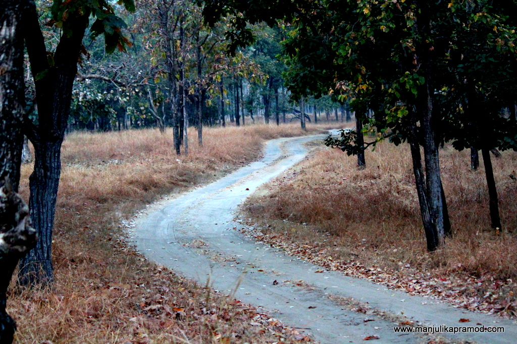 Jungle, Pench, Camping, WIldlife