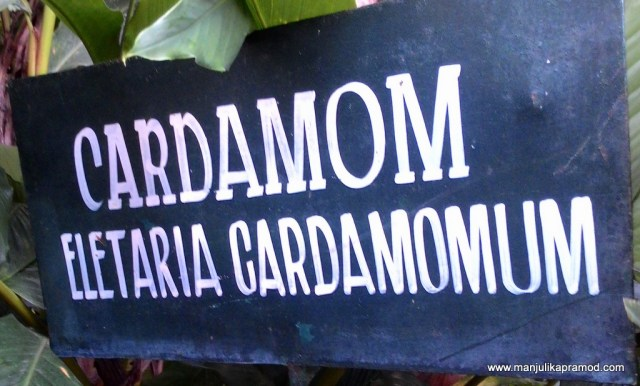 Cardamom, Travel, Pendown