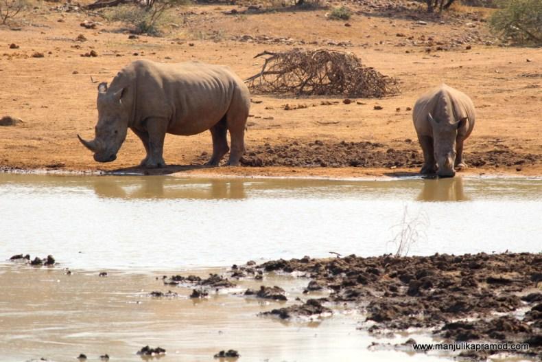 Volunteering, Safari