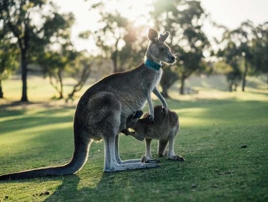 13 Things on my list for my Australian Adventure!