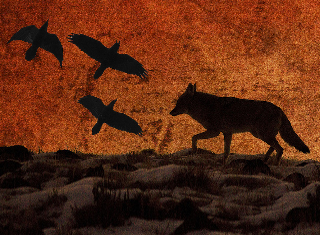 Crow and Coyote