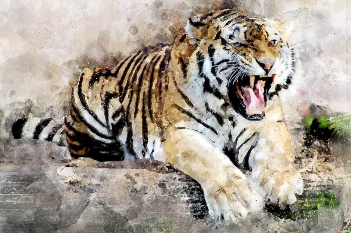 tiger-2864785_1280