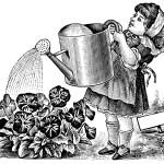 June Gardening
