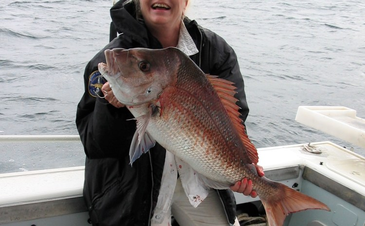 """John """"Stinker"""" Clarke says snapper is our fishing fave…."""