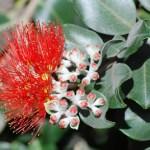 PLANTS TO ENCOURAGE CHRISTMAS SPIRIT IN TOUGH TIMES