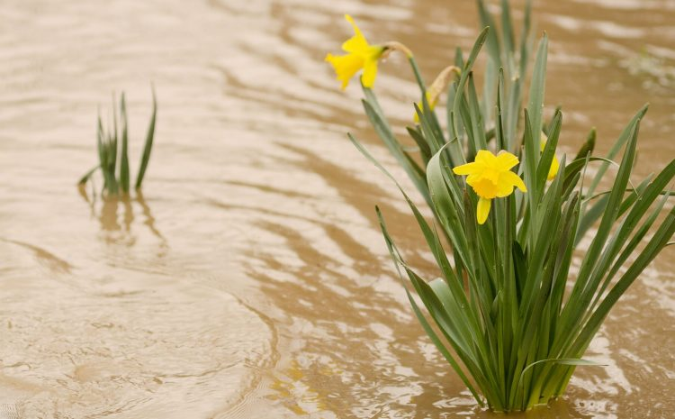 AFTER THE FLOOD – HOW TO HELP YOUR GARDEN RECOVER