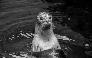 %name seal
