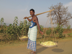 A villager takes mahua flowers for drying