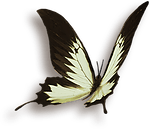 Butterfly – Tao of Vitality