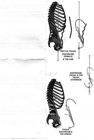 wellness spa – Skeletal Diagrams