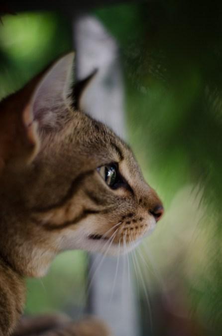 Katze im Gebüsch