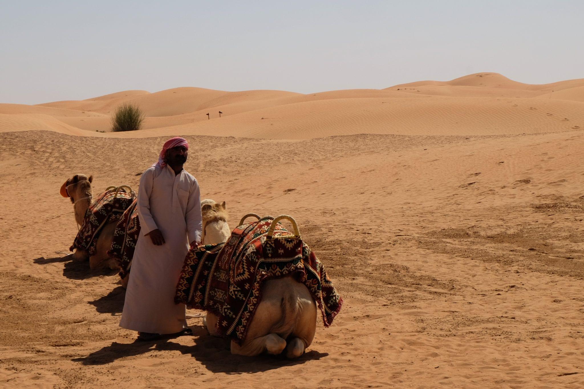 camel on a dubai desert tour