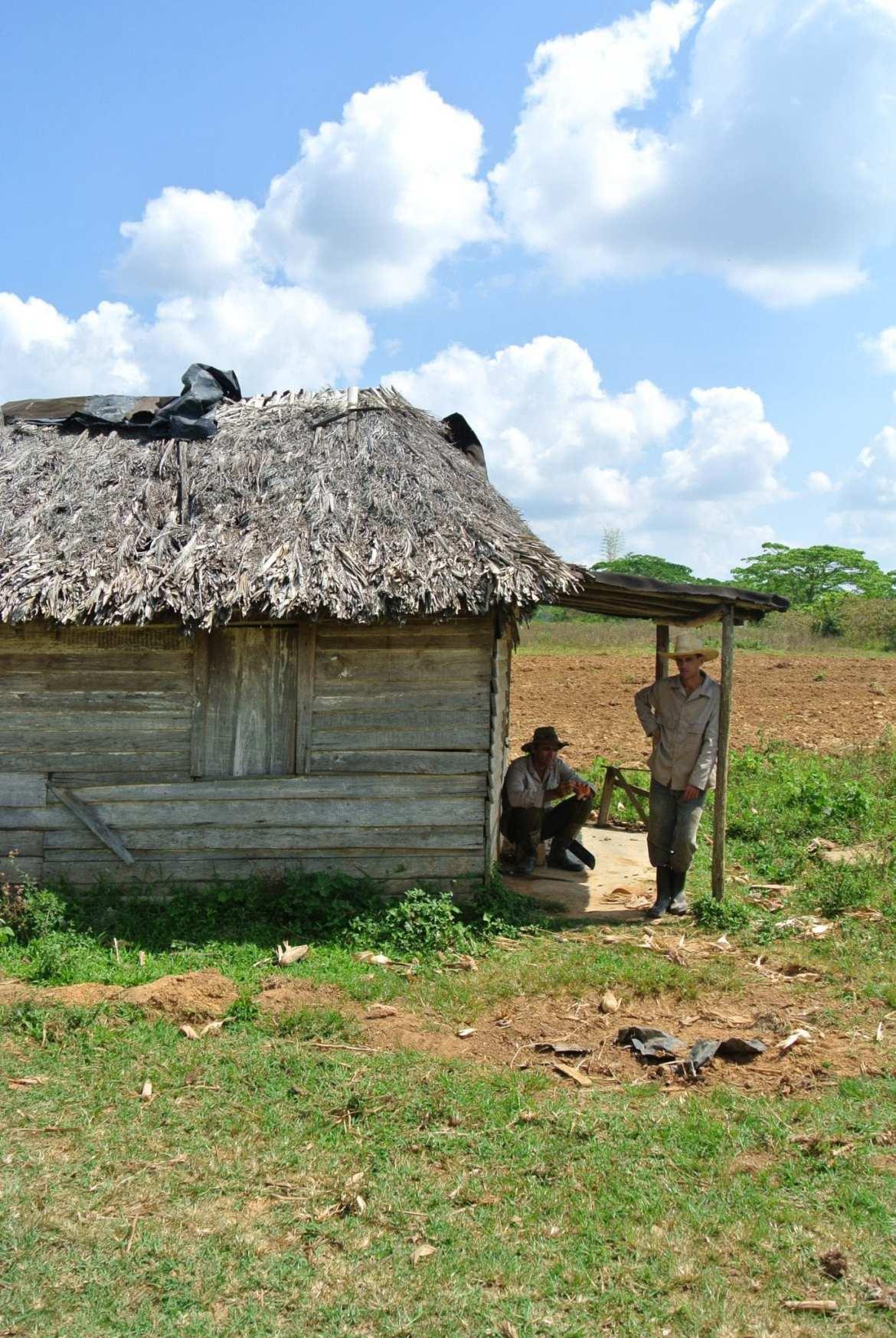 tobacco farmers in Vinales, cuba