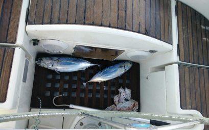 Nos premiers poissons pêchés en Sardaigne : deux bonites à la traîne.