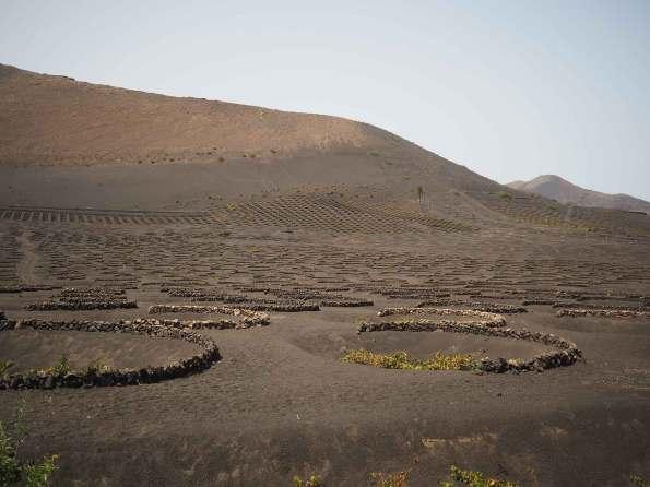 La Geria et ses champs de vigne sur Lanzarote.
