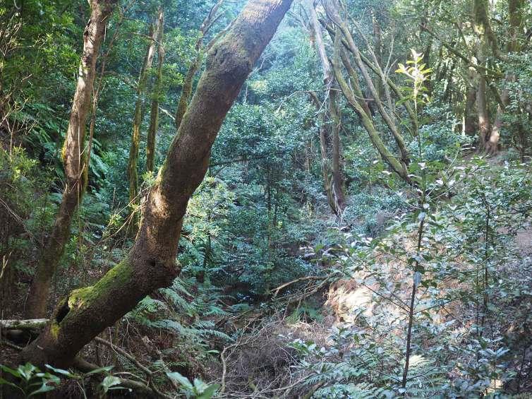 Las Creces, randonnée sur l'île de La Gomera