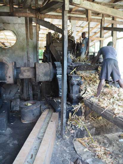 Les cannes à sucre sont broyées pour en extraire le jus.