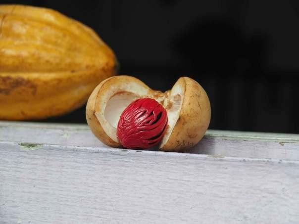 Nutmeg, noix de muscade, cultivée sur l'île de Grenade.