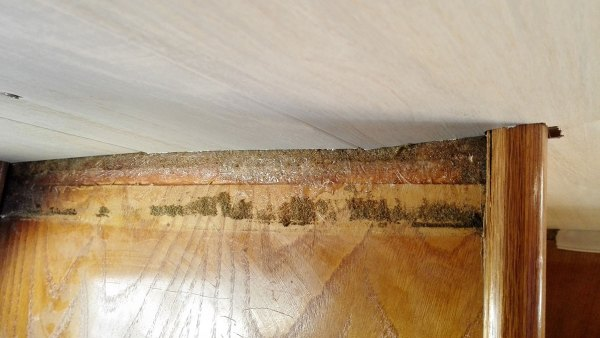 Bande de vaigrage décollée laissant des traces de colle sur le bois.