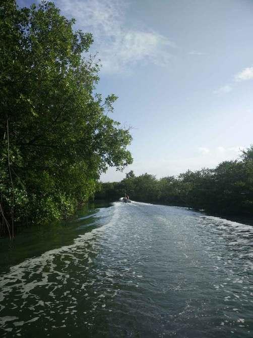 Rivière dans la mangrove pour accéder à Equinox dans le mouillage du Marin.