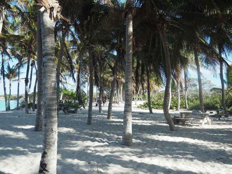 La cocoteraie et la plage de Terre de Haut dans la réserve de Petite Terre.