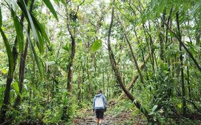 Anaïs marchant dans la forêt pour atteindre le Boiling Lake en Dominique.