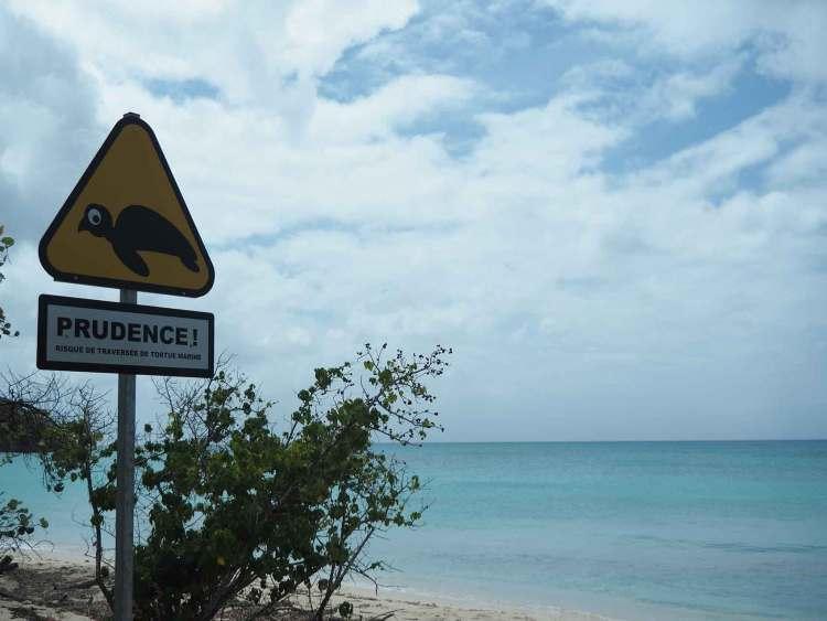 Avertissement tortue le long des plages de la côte sous le vent de l'île de Marie-Galante.