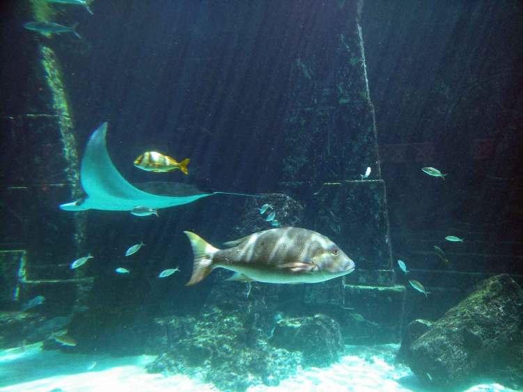 Immense aquarium dans le Atlantis Resort à Nassau.