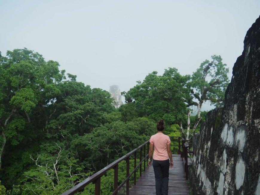 Depuis le Temple II à Tikal, on observe au loin les autres pyramides.