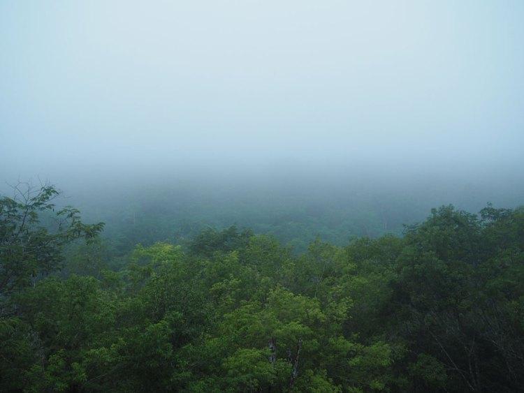 La canopée avant le lever du soleil sur les ruines de Tikal.
