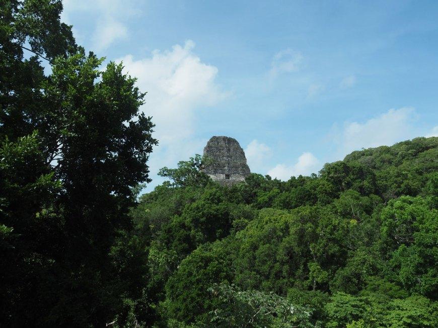 Pyramide maya dépassant de la canopée à Tikal au Guatemala.
