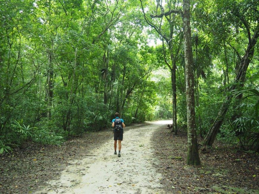 Sentier au coeur de la jungle tropicale de Tikal.