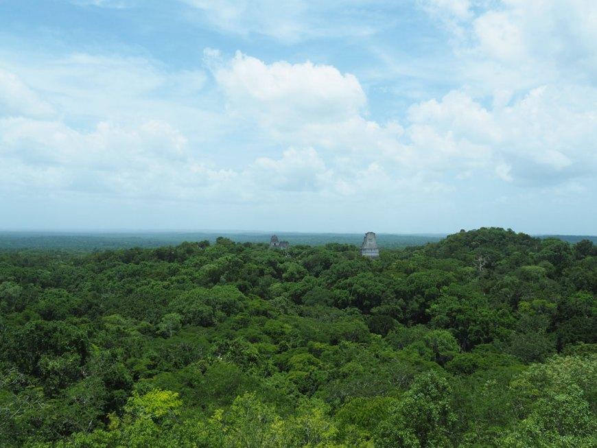 Vue sur la canopée au-dessus des ruines mayas de Tikal, au Guatemala.